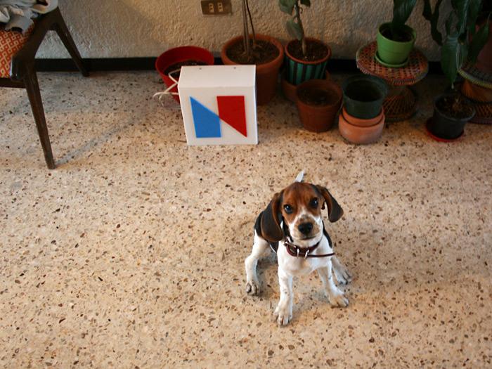 Ramone Random - El perro Nrmal