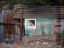 eltono-barrios-tamp20